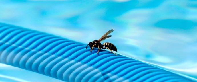 Comment éloigner moustiques, guêpes et autres insectes de sa piscine ?